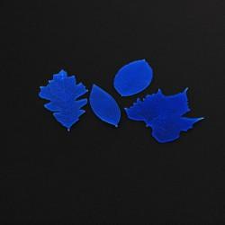 Αποτύπωμα Αποξηραμένα Φύλλα της FMM